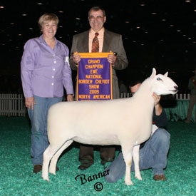 Grand Champion Ewe - 2009 NAILE Open Cheviot Show