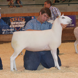 National Cheviot Show & Sale