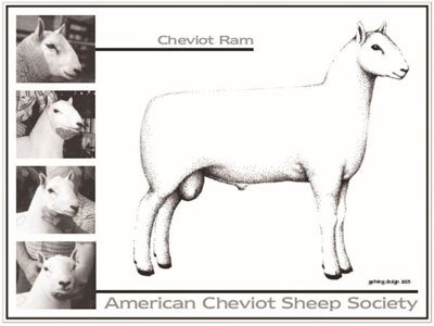Cheviot Ram Standards